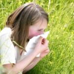 علاج حساسية الربيع مع الصنوبر