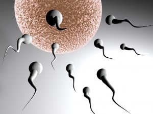 لمن ترغب في الحمل بسرعة  اليك 11 نصيحة   لحمل أسرع