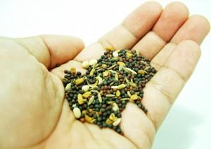 5 انواع من البذور المفيدة للصحة