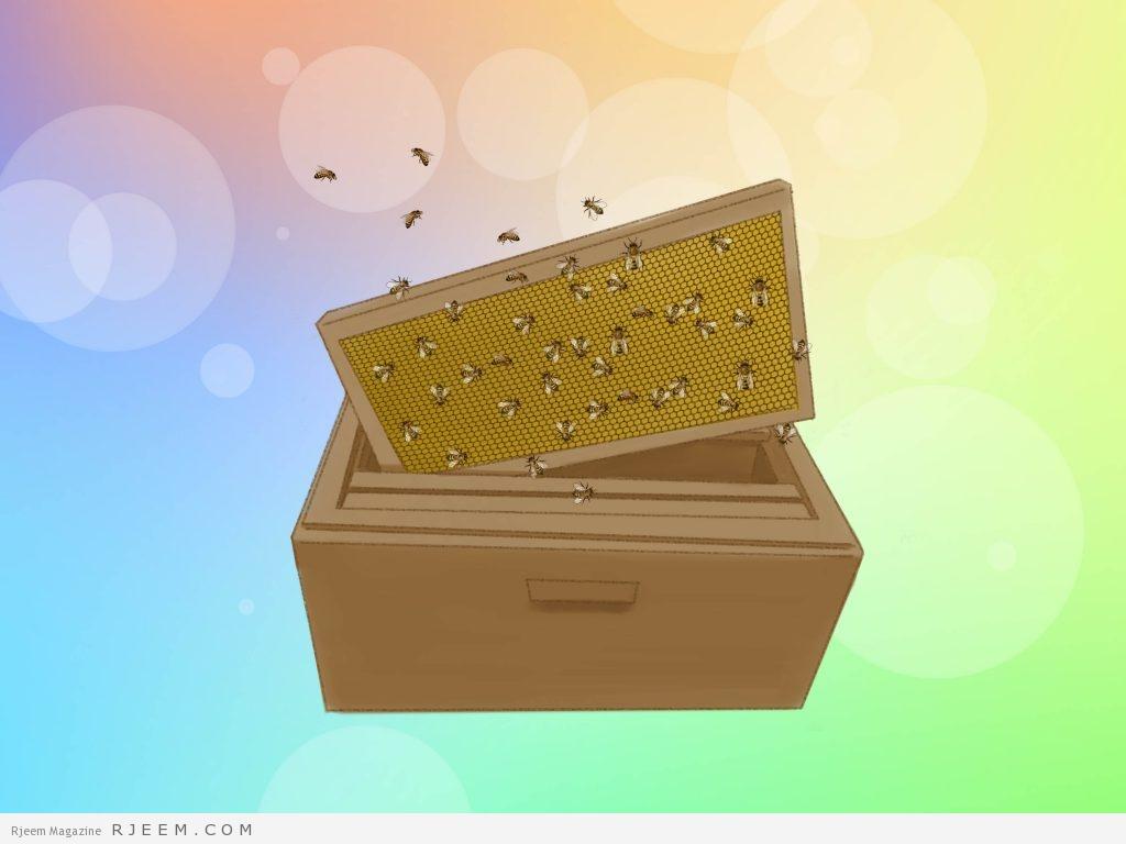 12 فائدة صحية لغذاء ملكة النحل