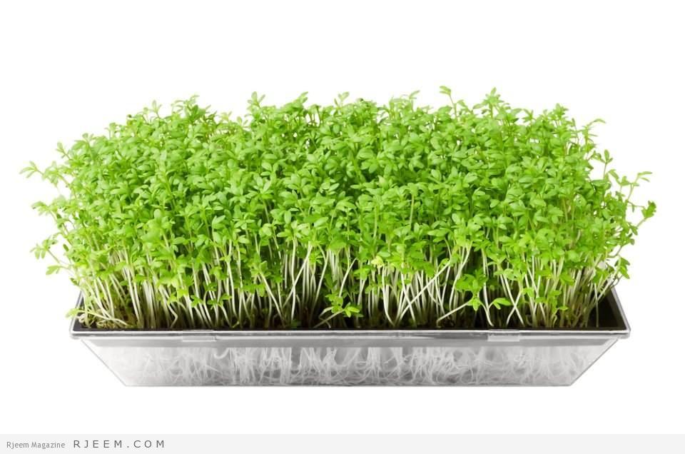 انباتات ترابية