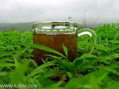 Photo of الشاي الاخضر وفقدان الوزن
