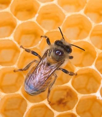Photo of العسل شفاء و لذة