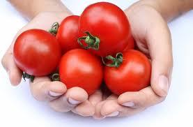 Photo of خصائص الطماطم