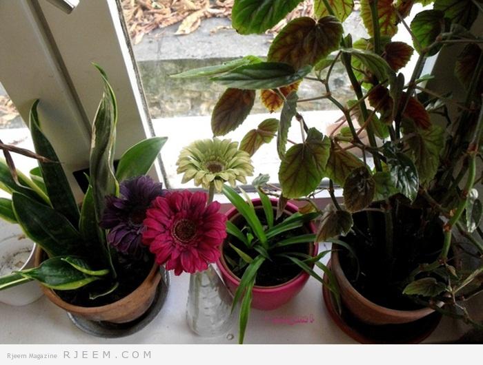 Photo of 4 نصائح للحفاظ على صحة النباتات المنزلية