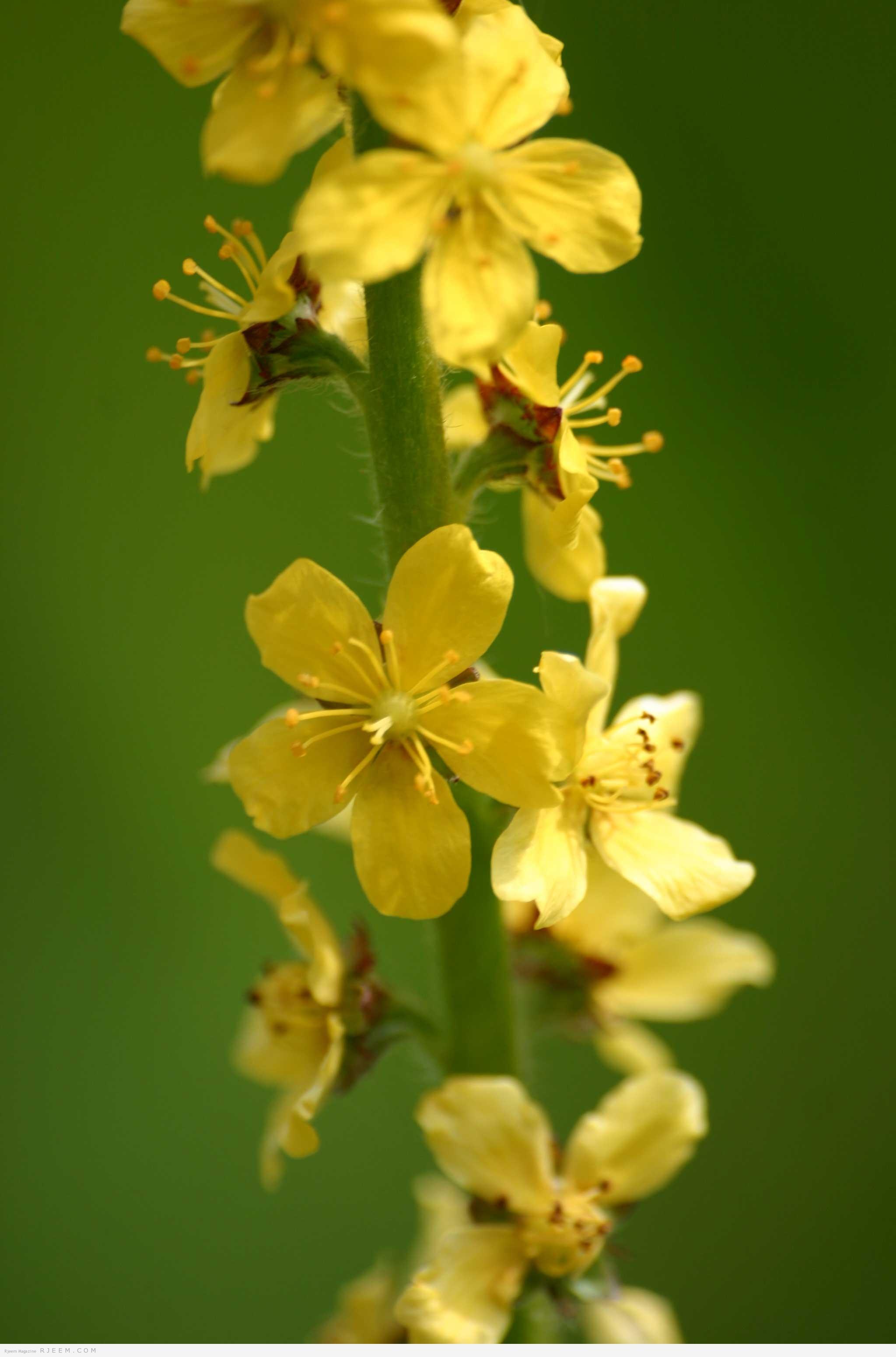 Photo of الفوائد الطبية لنبتة الغافث