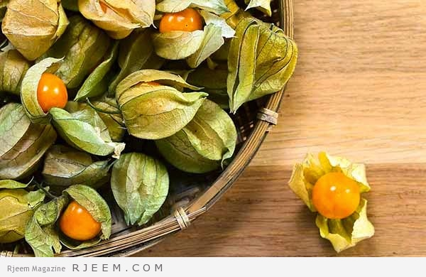 Photo of 12 فائده مذهله لنبات الحرنكش