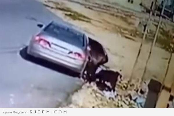 Photo of شاهد: لحظة سرقة مجموعة من الماعز في وضح النهار بمدينة الزرقاء في الأردن