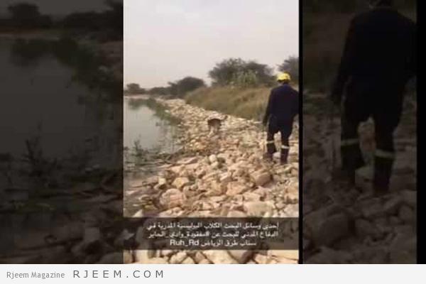 Photo of فيديو: الكلاب البوليسية تشارك في البحث عن مفقودة وادي الحاير