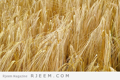 Photo of الخبز الأسمر وأهميته في حمية غذائة صحية
