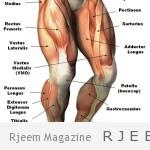 Photo of ما يجب أن تعرفه حول تمارين الساقين