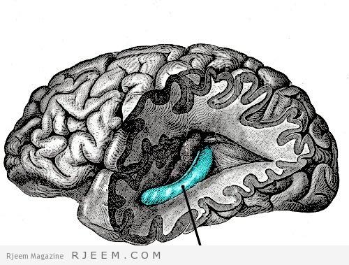 Photo of لماذا لا ترتفع درجة حرارة الدماغ أثناء التفكير؟