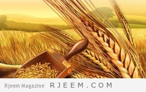 فوائد جنين القمح للطفل والجسم والمرأة