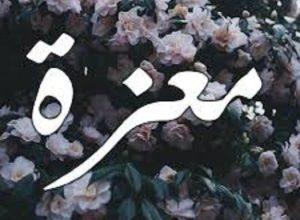 Photo of معنى اسم معزة