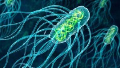Photo of بكتيريا تنهش لحم الإنسان في أستراليا