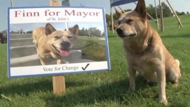 Photo of كلب يرشح نفسه لشغل منصب العمدة في بلدة كندية