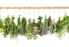 Photo of 10 أعشاب سحرية لتخفيف الوزن