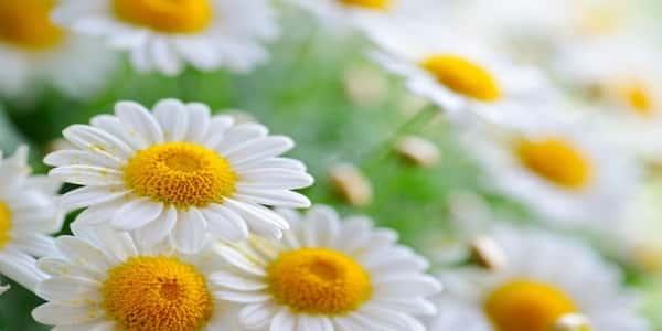علاج حرقان العين بالأعشاب - مجلة رجيم
