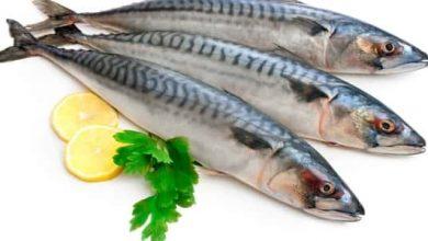 Photo of فوائد سمك الهلبوت