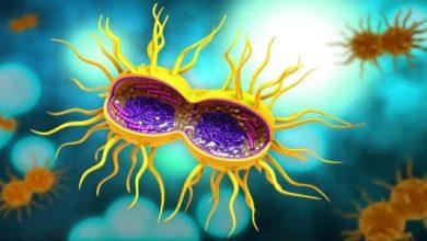 Photo of الأمراض التي تنتقل عن طريق الاتصال الجنسي