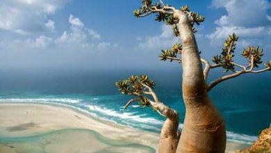 Photo of جزيرة  سقطري اليمنية نموذج لسحر الطبيعة وتفردها
