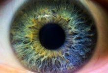 Photo of ما سبب اختلاف ألوان العيون