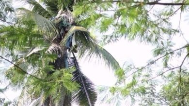Photo of بالفيديو: إنقاذ رجل أمضى 3 سنوات فوق شجرة في الفلبين