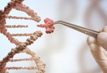 Photo of باحثون ينجحون في استجلاء المزيد حول دور الطفرات الجينية في الإصابة بالسرطان