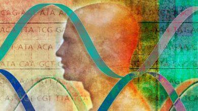 Photo of كيف يتم تحديد الصفات الوراثية