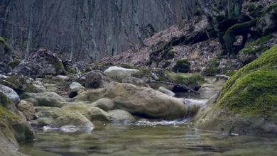 Photo of ما هي الصخور الصهارية