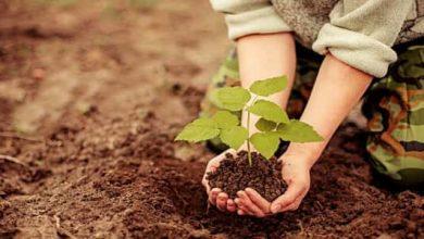 Photo of موضوع تعبير عن يوم الشجرة