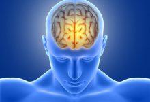 Photo of العقل يملك «زر تشغيل» لحرق الدهون بعد الأكل.. هكذا يعمل