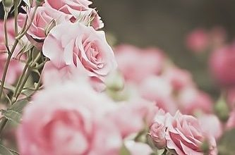 Photo of قصائد عن الصبر  , شعر عن الصبر , شعر عن الفرج والشدة , خواطر عن الصبر, أجمل ما قيل في الصبر والتصبر