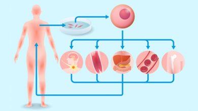 Photo of هيئة الغذاء والدواء الأمريكية تُسرّع من وتيرة أبحاث إنتاج الأعضاء البشرية