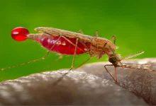 Photo of أسباب مرض الملاريا