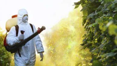 Photo of أضرار المبيدات الحشرية