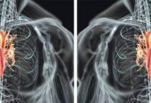 Photo of مكان القلب في جسم الانسان