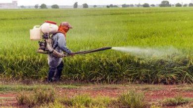 Photo of فوائد المبيدات الحشرية