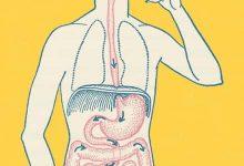 Photo of كيف تتم عملية هضم الطعام