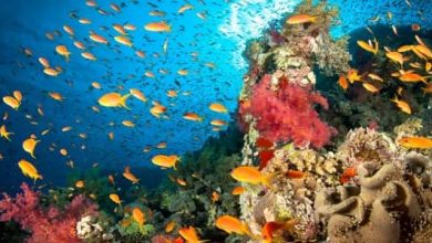 Photo of معلومات عن الشعاب المرجانية