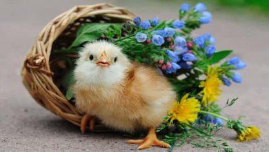 Photo of موضوع تعبير عن الطيور
