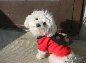 Photo of كلب اللولو , صور كلب اللولو , خلفيات كلاب اللولو Lulu Dog