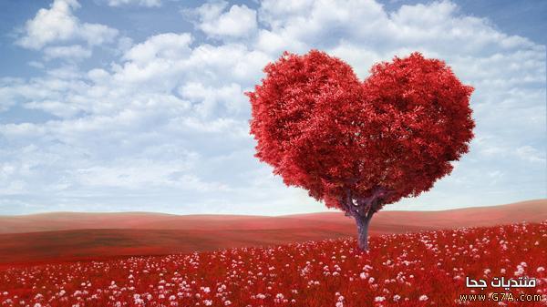صور حب وغرام رومانسية hd 2018 أحلى صور مكتوب عليها كلام حب وعبارات عشق 2019 جميلة وحزينة للفيسبوك almastba.com_1388752178_473.jpg