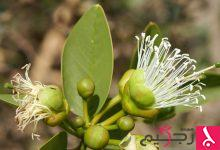 Photo of فوائد نبات الحزا