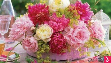 Photo of انواع الزهور حول العالم