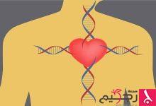 Photo of أسباب روماتيزم القلب