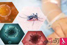 Photo of طريقة علاج حمى الضنك
