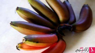 Photo of معلومات عن الموز الأحمر