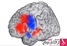Photo of كيف تتحرك الأفكار عبر الدماغ؟