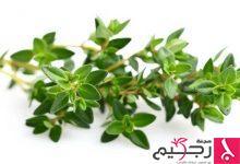 Photo of فوائد الزعتر البري